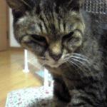 22年目の老猫